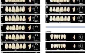 dobór i ustawienie zębów